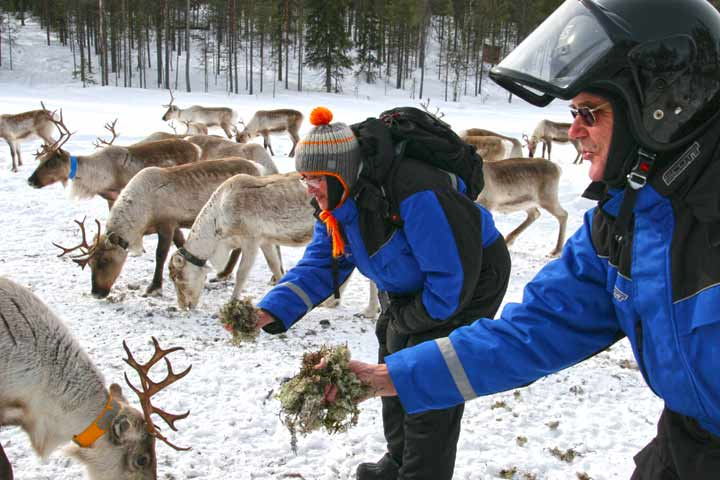 The Reindeer Forest